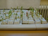 cress-keyboard 14