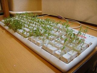 keyboard with cress